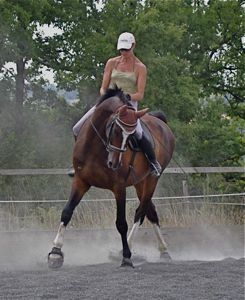 natural horse training dressage