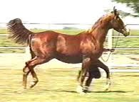 posture hollow horse