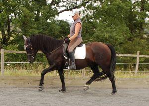 rescue horse success story