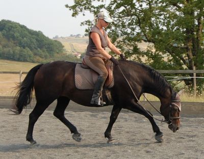 dressage correct longitudinal stretch