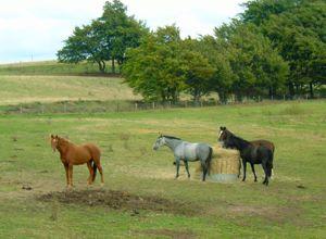 Hay feeders encourage lack of movement