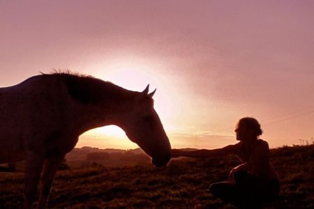 horse-in-sunset