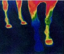 thermograph one foot shod