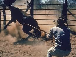 training horses with force and violence