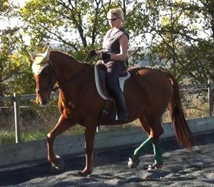 training horses: gymnastic beauty and balance