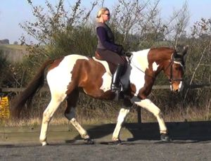 training horses: gymnastic connection through dressage