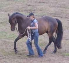 training horses: natural horsemanship