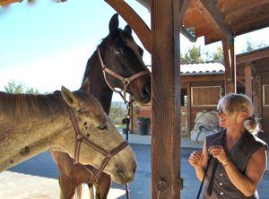 training horses: happy horses