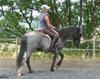 young horse training riding
