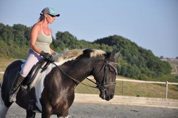 training horses dressage