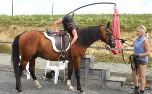 young horse training backing