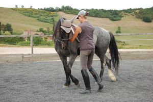 young horse training in-hand work